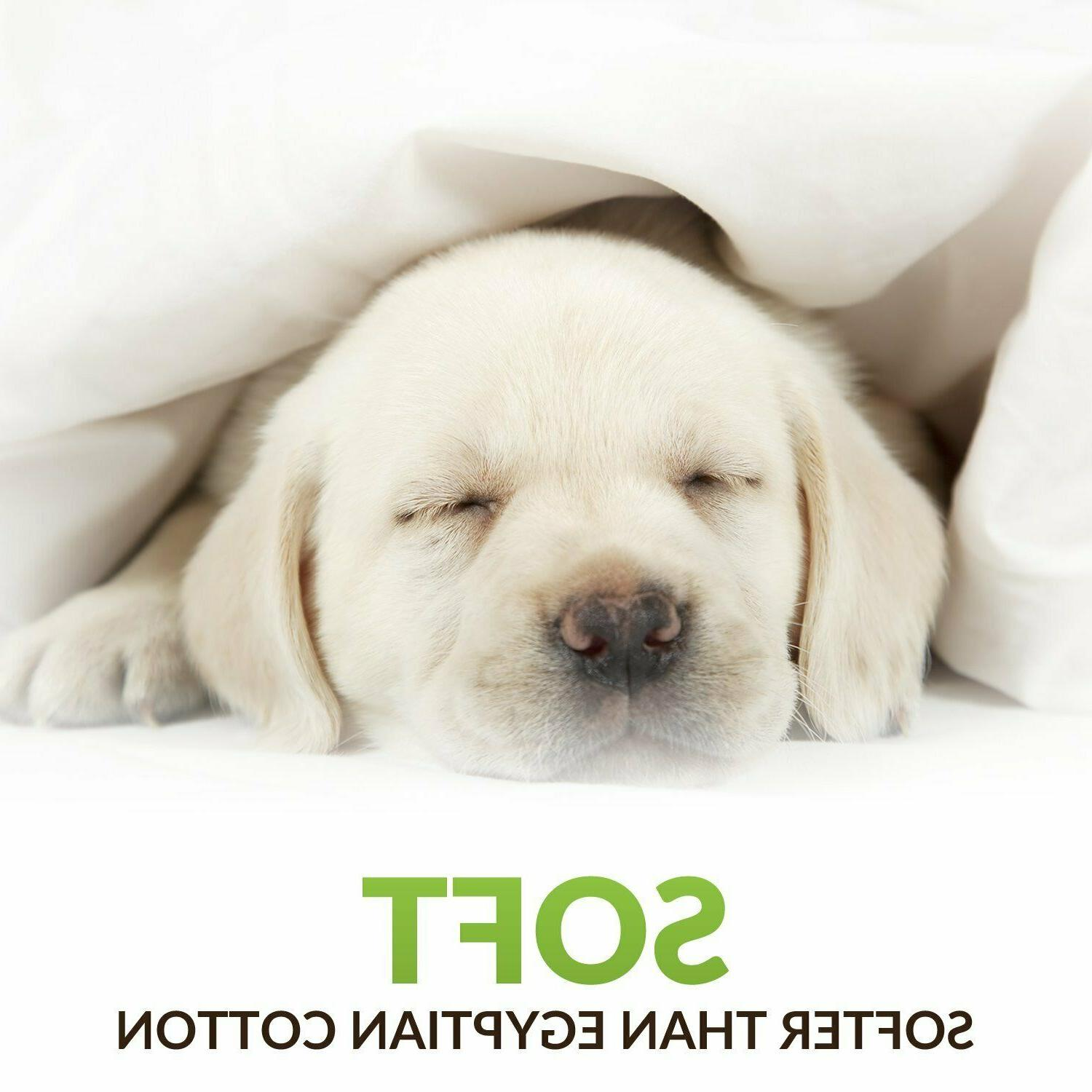 Premium Pillowcase of 2 Ultra Soft Hypoallergenic