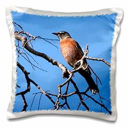 3dRose Red Robin on a Branch, Pillow Case, 16 by 16-inch